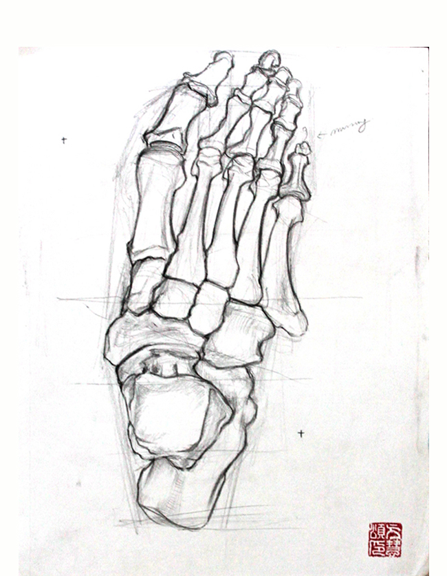 A pencil sketch of the bones of the foot