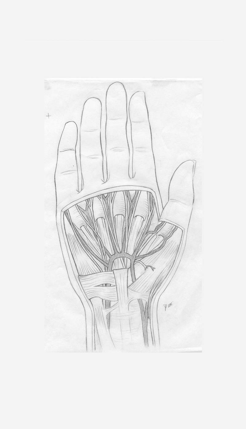 A pencil sketch of the superficial palm